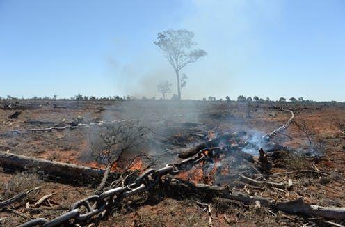 Rage over environmental destruction builds
